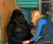 Een grote gorilla